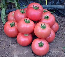 Розовый индетерминантный томат