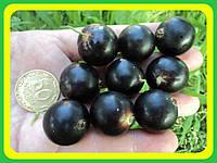 Смородина черная Черный Бумер ( саженцы )