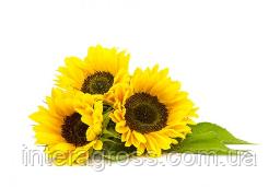 Купить насіння соняшника Фелікс