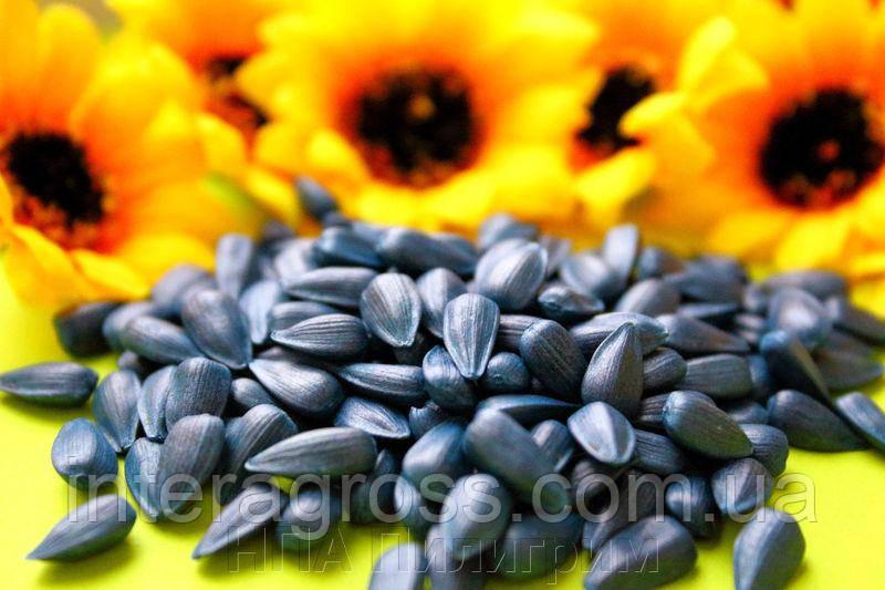 Купить Насіння соняшнику Рімі