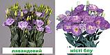 Еустома Маріачі F1 (колір на вибір) 100 шт., фото 5