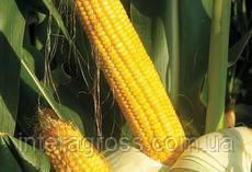 Купить Кукурудза ОС 378