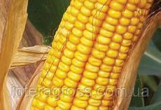 Купить Кукурудза Драва