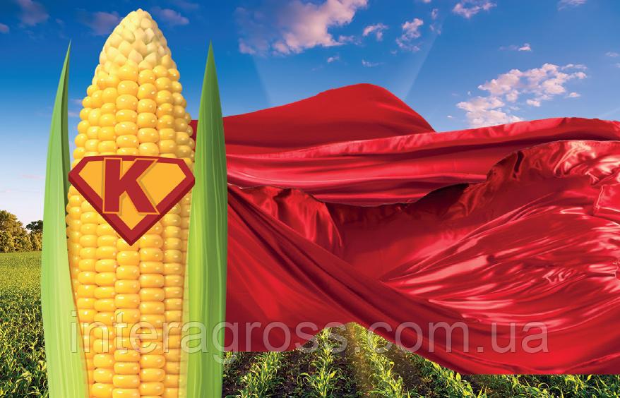 Купить Насіння кукурудзи Теліас