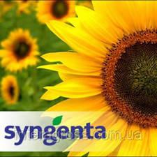 Купить Насіння соняшника СИ Неостар CLP
