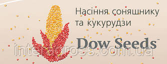 Купити насіння кукурудзи ДС 0336
