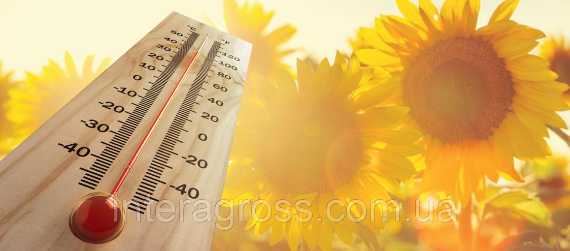 Купить Насіння соняшника СИ Арізона