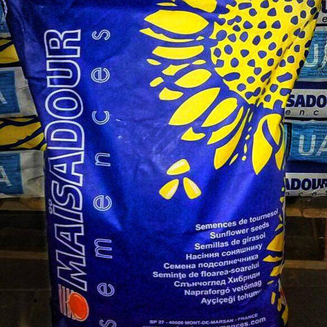 Семена подсолнечника, Maisadour, MAS 97 А, фото 2