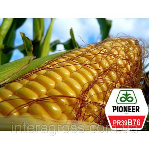 Купить Насіння кукурудзи ПР39Б76