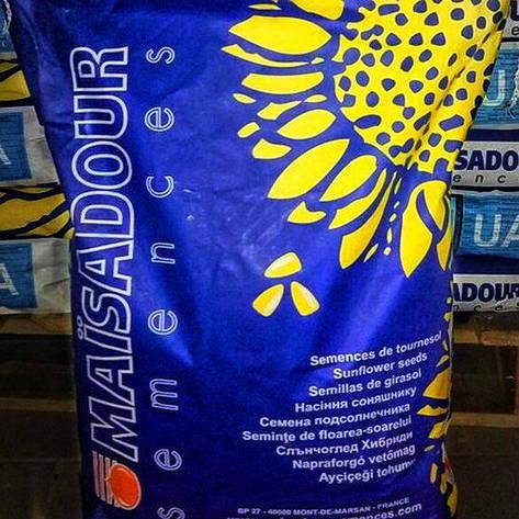 Семена подсолнечника, Майсадур, МАС 96 П, фото 2