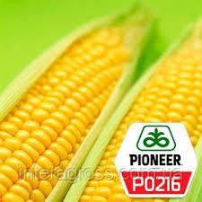 Купить Насіння Кукурудзи П0216