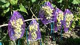 Мешочки для винограда 2 кг 22*33 см, 50 шт, фиолетовая, фото 2