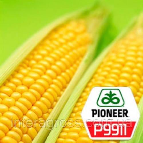 Купить Насіння кукурудзи П9911