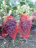 Сеточки для защиты винограда 5 кг 28*40 см, 50 шт, красная, фото 2