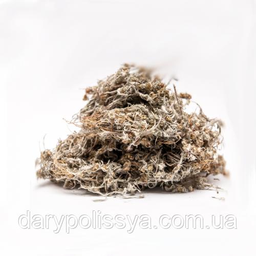 Сухоцвіт Багнова (Сухоцвіт Топящая або Болотна), 50г