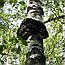 Чага Березовый Гриб (Трутовик скошенный), 50г, фото 2