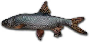 Антистрессовая игрушка 3K Fish Жерех малый 50х25см