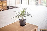 Стол деревянный W-1, ясень или дуб, (Ш1200* В760 * Г900)