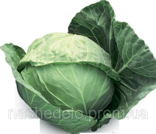 Семена капусты б/к Адема F1 1000 семян Rijk Zwaan