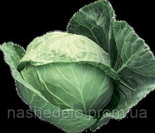 Семена капусты б/к Адема F1 1000 семян (калиброванные) Rijk Zwaan