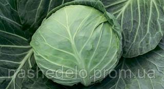Семена капусты б/к Силима F1 2500 семян (калиброванные) Rijk Zwaan