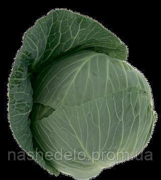 Семена капусты б/к Такома F1 2500 семян (калиброванные) Rijk Zwaan