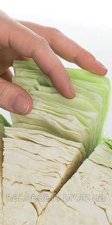 Семена капусты б/к Секома F1 2500 семян (калиброванные) Rijk Zwaan