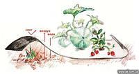Агроволокно Агротекс 80 г/м² чёрно-белое (1,6м*100м), мульчирующее от сорняков, для клубники