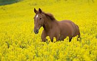 Кормовые травы