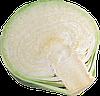Семена капусты б/к Сторема F1 1000 семян (калиброванные) Rijk Zwaan