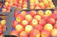 13 місце в світі за виробництвом яблук за Украиною