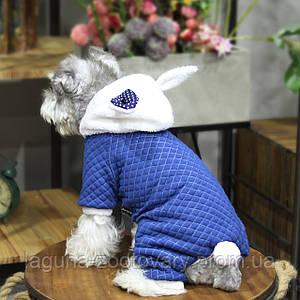 Комбинезон РЭББИТ ДОТ для собак, синий, размеры S, M, L