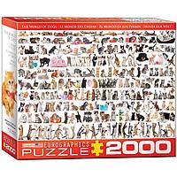"""Пазл """"Мир кошек"""" 2000 элементов EuroGraphics (8220-0580)"""