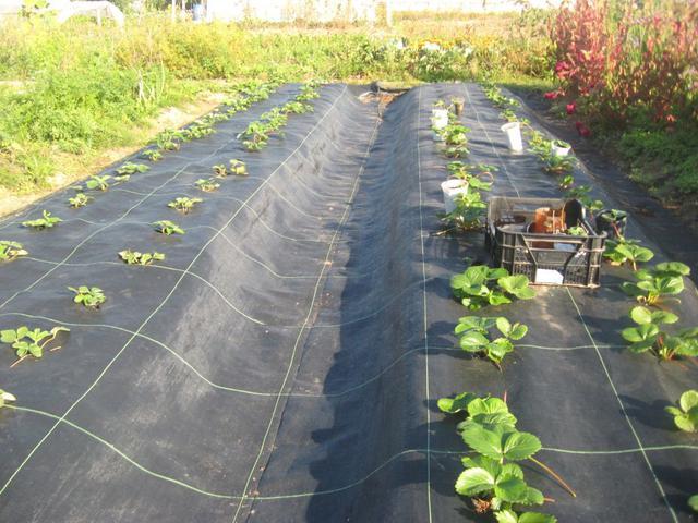 черная агроткань для защиты почвы