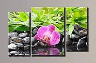 Картина модульная HolstArt Орхидея на камнях 54*87см 3 модуля арт.HAT-005