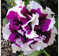 Петуния Pirouette Purple