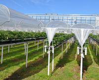 Плівка запроектована для вирощування м'яких фруктів KRITIFIL® 2495 4сезони