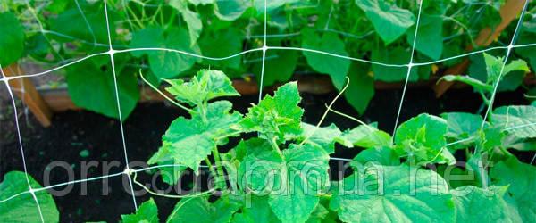 Сетка для выращивания сельско-хозяйственных культур