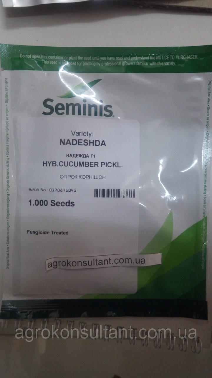 Семена огурца Надежда F1 (Seminis) 1000 семян — пчелоопыляемый, ультра-ранний гибрид (38-40 дней)