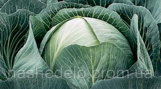 Семена капусты б/к Калорама F1 1000 семян (калиброванные) Rijk Zwaan