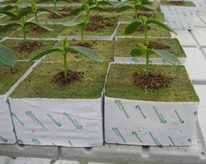 выращивание огурцов в теплице на субстрате