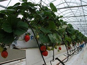 выращивание на субстратах