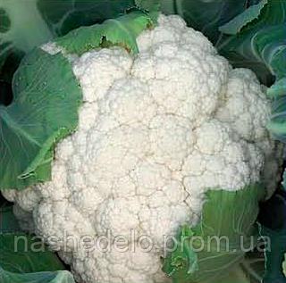 Семена цветной капусты Опал 2500 семян Rijk Zwaan