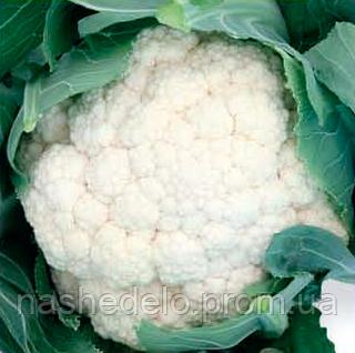Семена цветной капусты Стабилис F1 1000 семян Rijk Zwaan