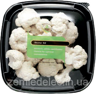 Семена цветной капусты Декстер F1 1000 семян Rijk Zwaan