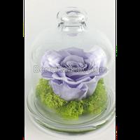 Стабилизированная роза в стекле (светло-фиолетовая)