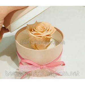 Стабилизированная роза в коробке (кремовая)