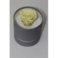 Стабилизированная роза в коробке (белая)