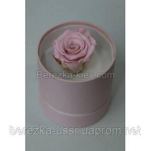 Стабилизированная роза в коробке (нежно-розовая)