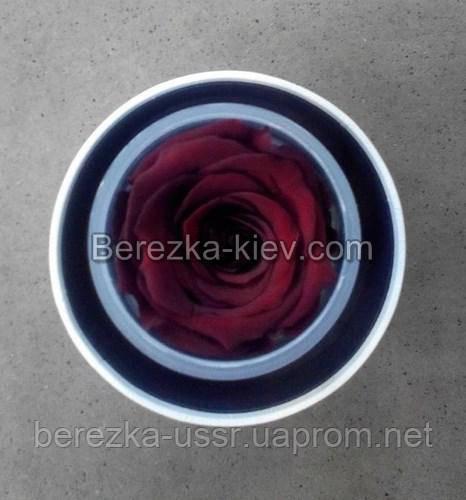 Стабилизированная роза в белой коробке (красная)